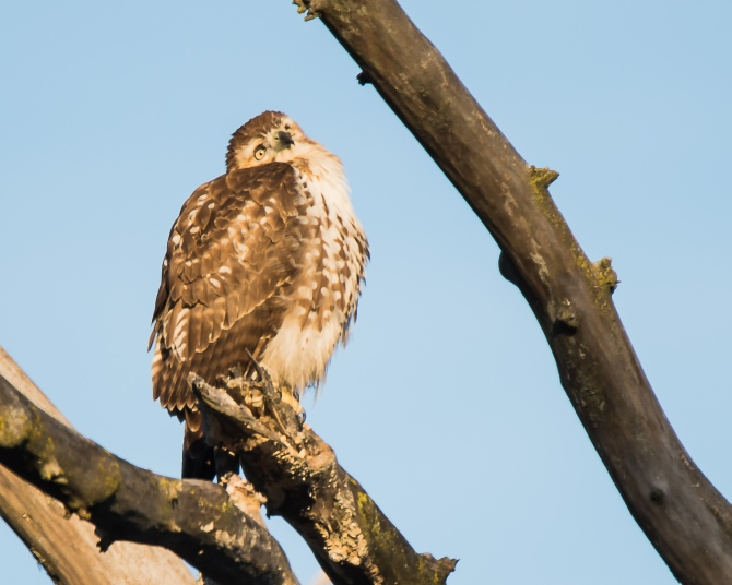 Thinking red-tail Croton Dec 2014-1