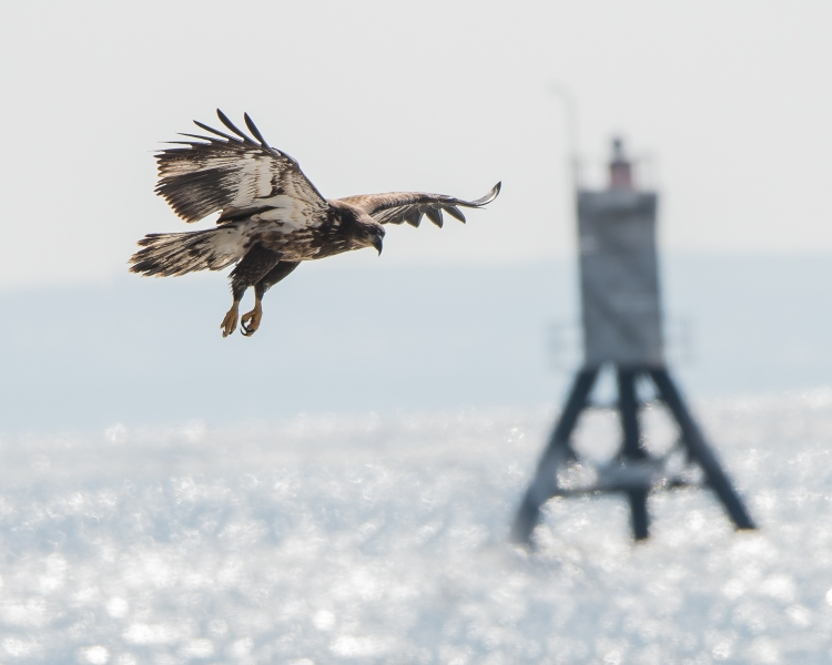 eagle first year buoy-1