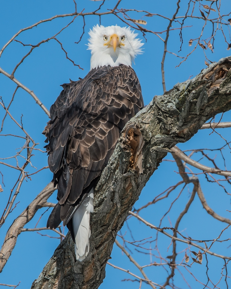 Eagles in sun 2-10-15-4