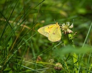 butterfly June 2015-1