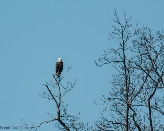 eagle George's Island-1