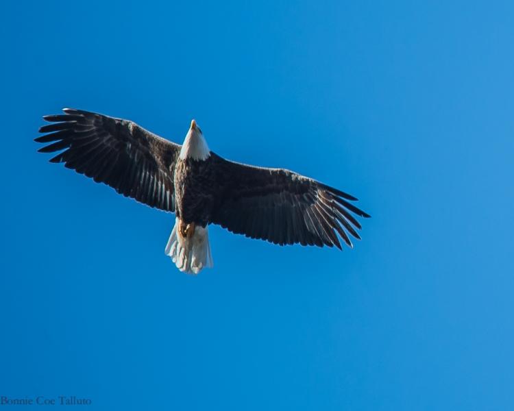 eagle ossining-1