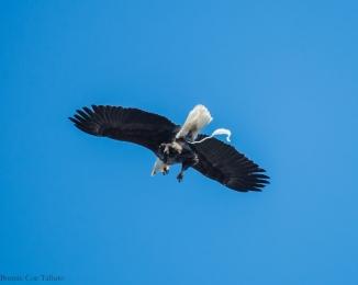 eagle poop trail-1