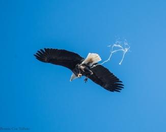 eagle poop trail-2