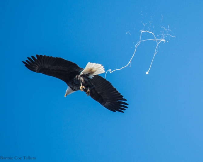 eagle poop trail-3
