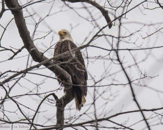 eaglepatriarch Hudson-1