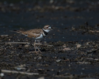 20160704_killdeer-thornwood_001