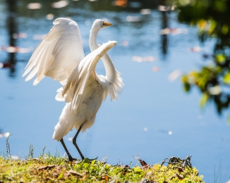 20161005_egret-wings-thornwood_001