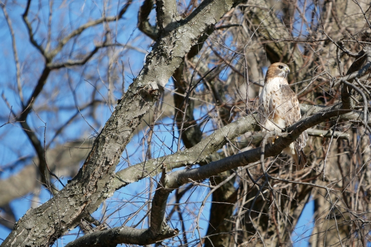 20161215_red-tail-croton_001