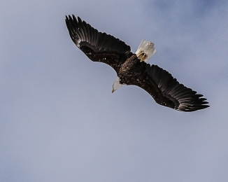20170210_eagle-flyover-georges-island_001