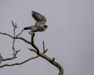 20171013 falcon takeoff stateline _