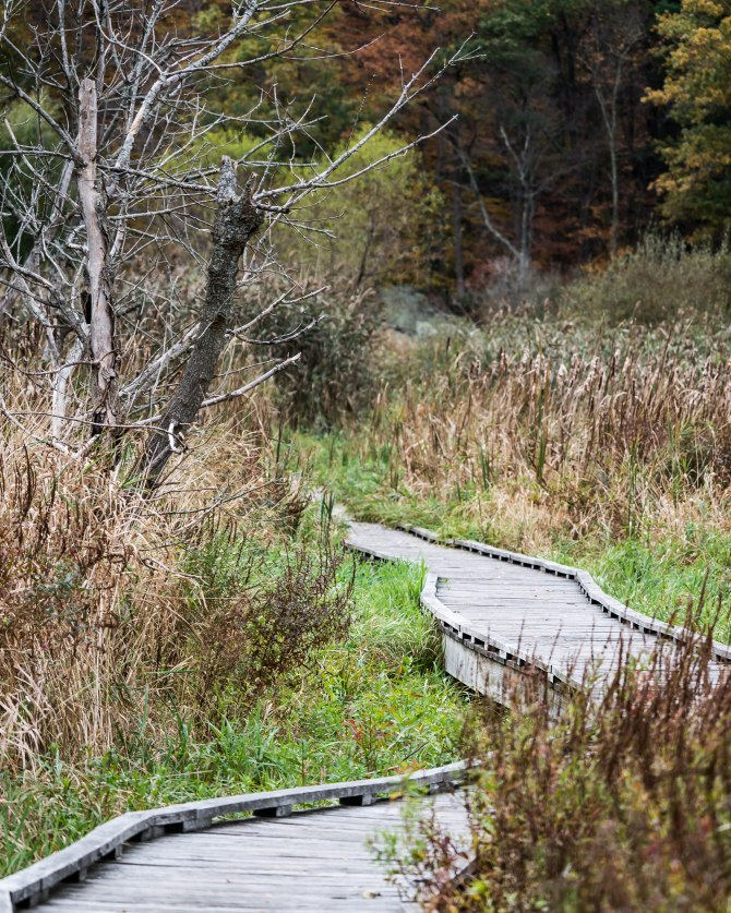 20171025 great swamp AT boardwalk pawling _