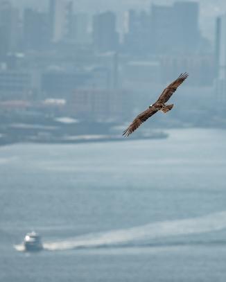 20180906 osprey stateline _